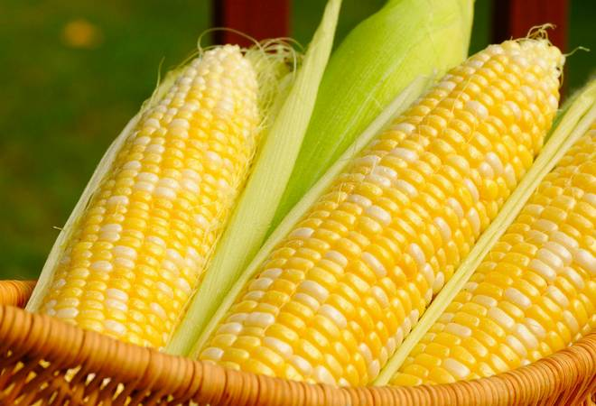 Кукуруза и поджелудочная железа