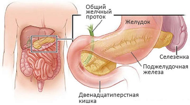 Расположение поджелудочной железы у детей