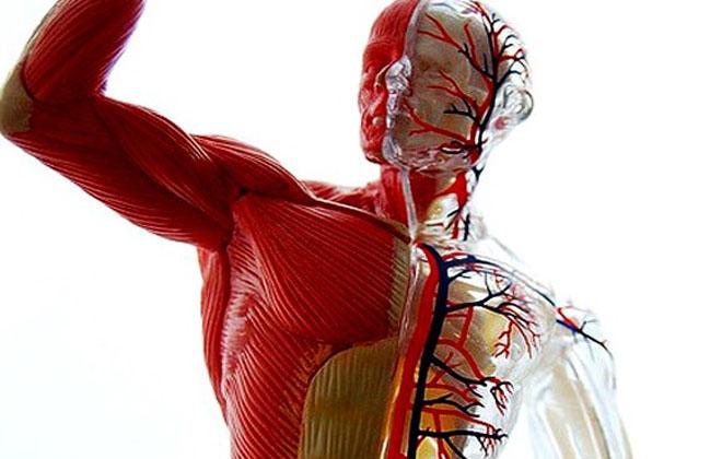 Тонус мышц