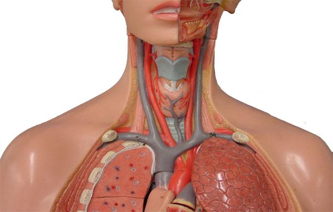 Заболевание подключичной вены