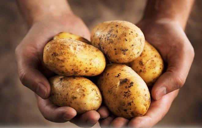 Картофель от варикоза
