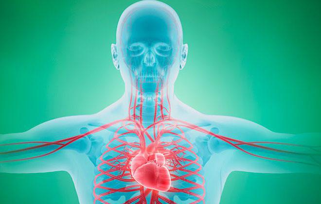 Наличие болезней кровеносной системы