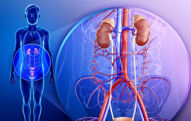 Поражения органов мочеполовой системы