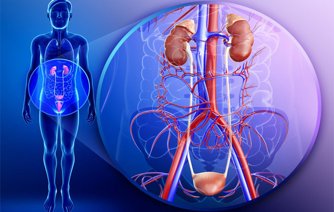 Воспаление в мочеполовой системе
