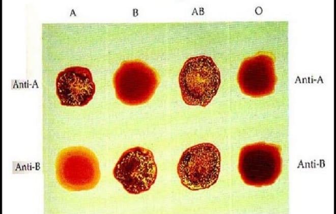 Ячейки с агглютиногенами