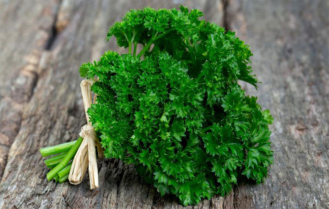 Зелень петрушка