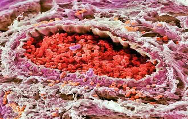 Допустимая норма клеток