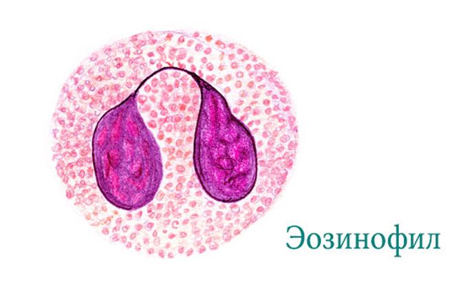 Тип лейкоцитов