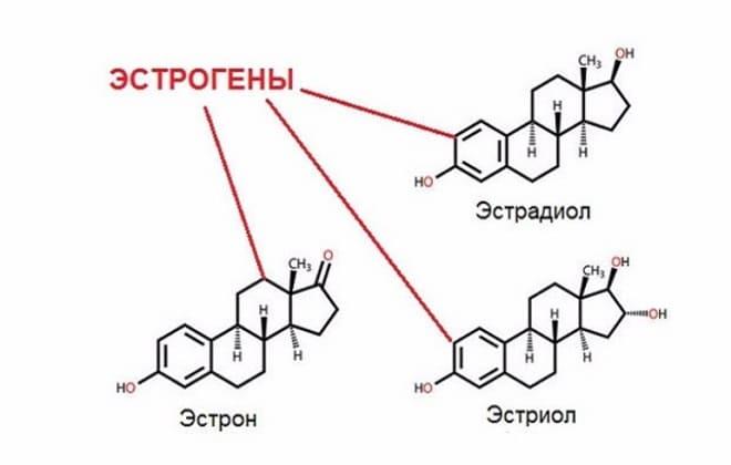 Эстрадиол и эстроген это одно и тоже в организме