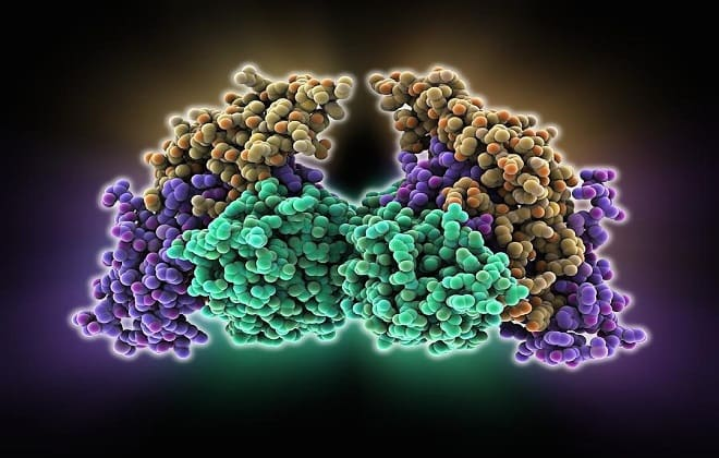 Фолликулостимулирующий гормон при климаксе