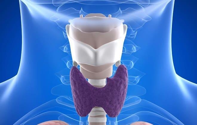 Гормоны щитовидной железы человека