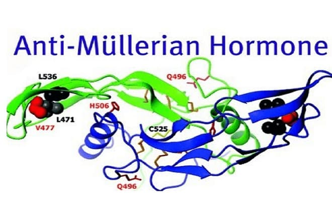 Молекула AMG в организме человека