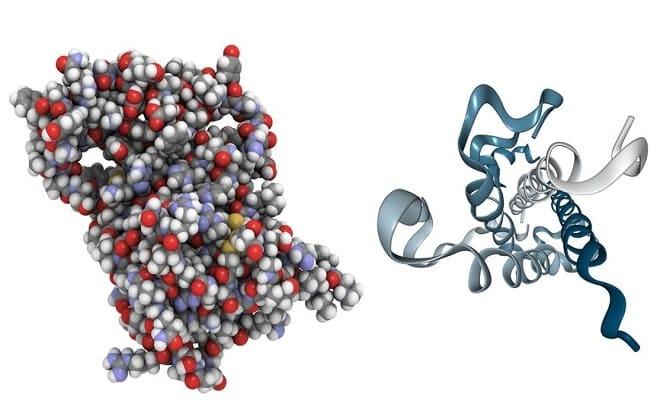 Молекула гормона пролактин