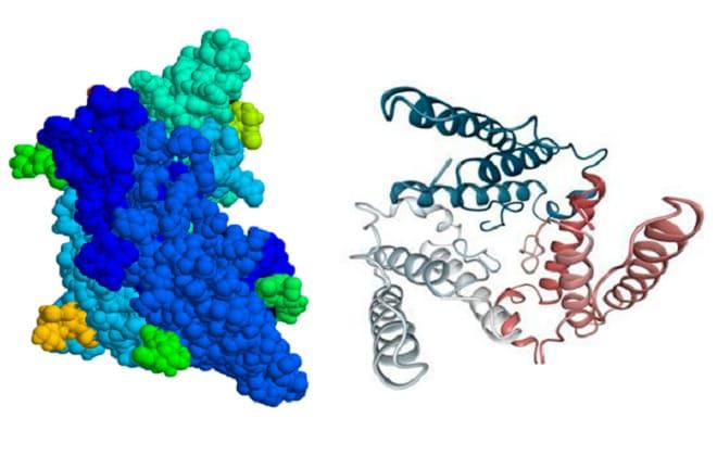 Соотношение ЛГ и ФСГ в организме