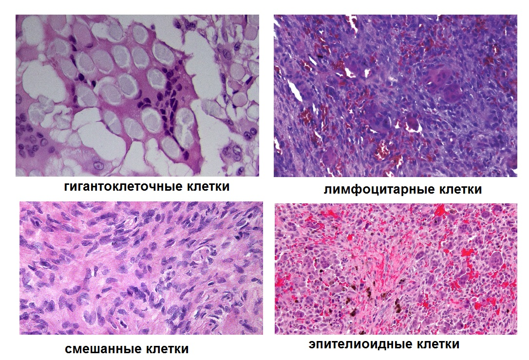 Виды клеток