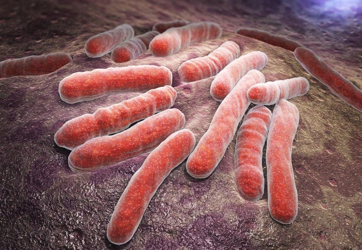 Микобактерия