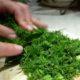 Семена укропа для лечения поджелудочной железы