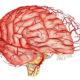 Как лечить вегетососудистую дистонию головного мозга и симптомы заболевания