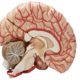 Препараты для лечения атеросклероза сосудов головного мозга