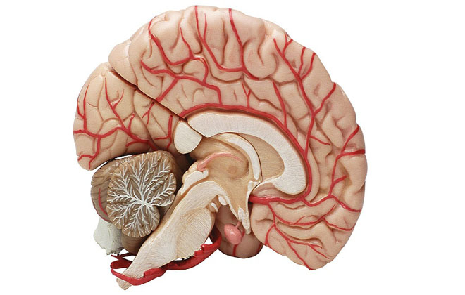 Какие препараты используют для лечения атеросклероза сосудов головного мозга