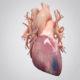 Сколько лет после инфаркта живут мужчины и последствия у женщин