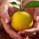 Снижает ли лимон высокое артериальное давление (гипертония)