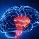 Какие прогнозы на выздоровление после ишемического инсульта ствола головного мозга