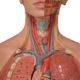 Как лечить тромбоз подключичной вены (артерии) и его симптомы