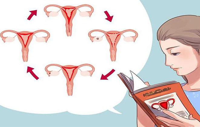 Длительность крови после родов