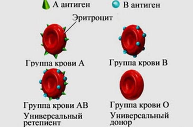 Разновидности биологических жидкостей реципиентов