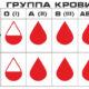 Что значит отрицательный и положительный резус-фактор крови у мужчины и откуда взялся