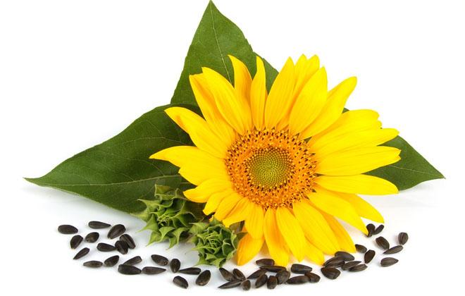 Семена черные
