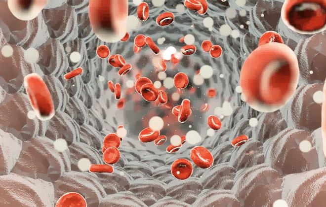 Эритроциты в артерии