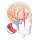 Сколько можно прожить с дисциркуляторной энцефалопатией смешанного генеза 1 степени и как лечить ДЭП