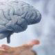Сколько можно прожить при дисциркуляторной энцефалопатии 3 степени смешанного генеза и как ее лечить