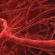 Как укрепить слабые стенки сосудов (капилляров) головного мозга народными средствами и что делать для лечения ломких (хрупких) вен на ногах