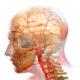 Как лечить кровеносные сосуды (вены) женщинам и препараты которые можно принимать при проблемах с артериями