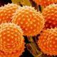 О чем говорят повышены эозинофилы в крови у ребенка