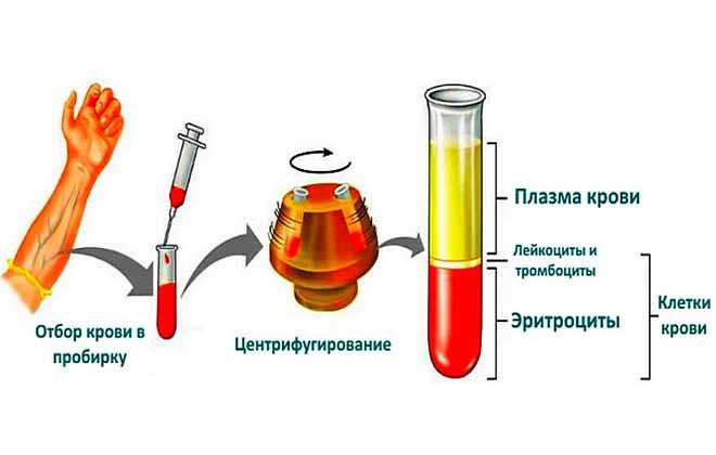 Объем эритроцитов в крови