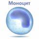 О чем говорят понижены моноциты у взрослого (моноцитопения у женщин)