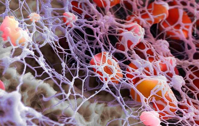 Клетки тромбоциты в организме