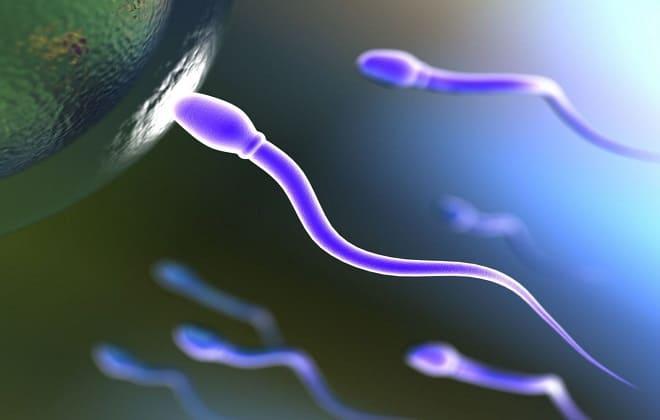 Активные сперматозоиды
