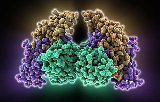 Фолликулостимулирующий гормон (ФСГ)