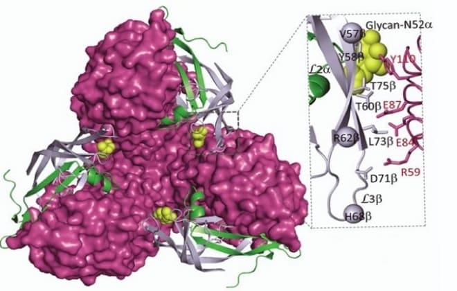 Фолликулостимулирующий гормон в организме