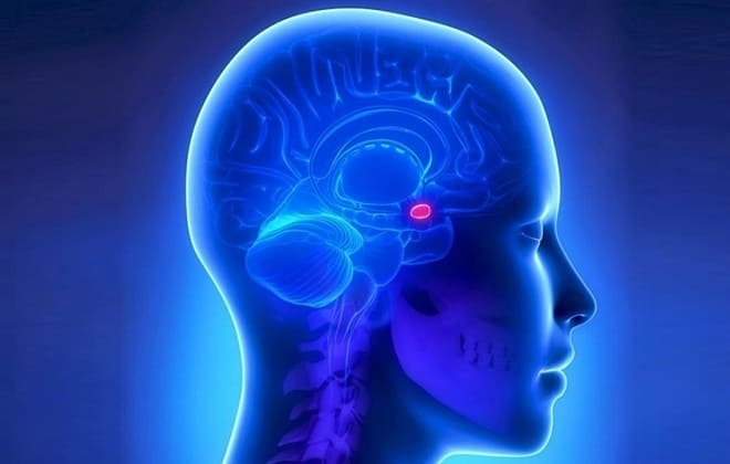 Гормоны гипофиза головного мозга