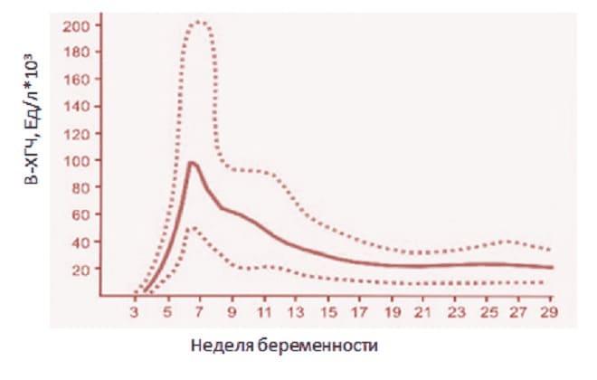 График роста ХГЧ при 4 неделе беременности