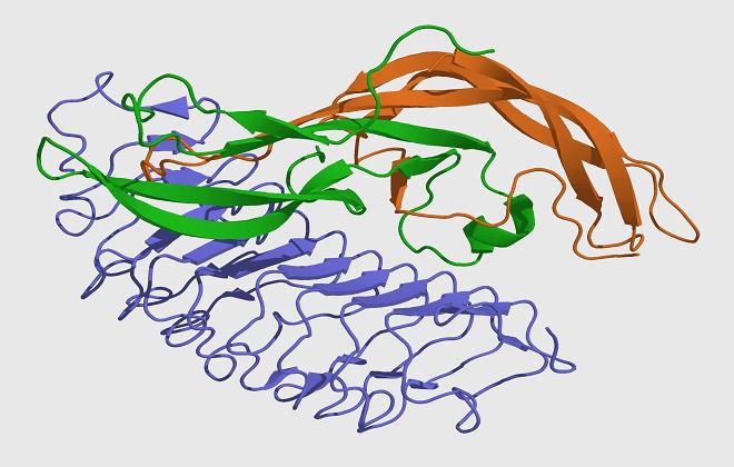 Молекула гормона ФСГ у мужчин