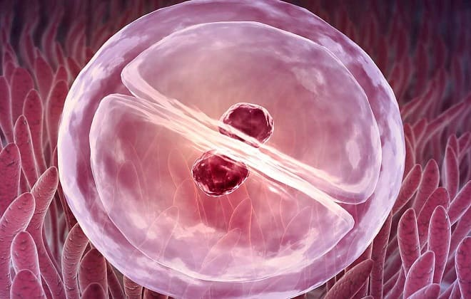 Рост ХГЧ по дням после имплантации эмбриона