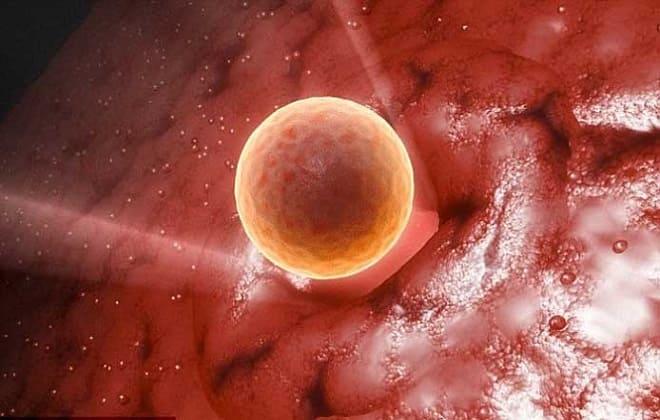 Созревание яйцеклетки