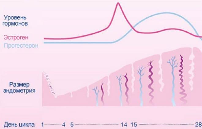 Уровень гормонов по циклу